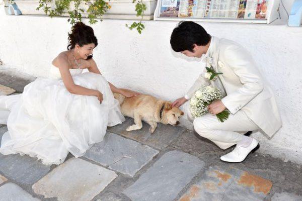 出会いがなければ、結婚は夢のまた夢